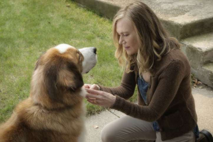 film_review_a_dog-s_p_will_1